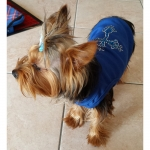 Blue T-Shirt for Dog with Cross in Rhinestones
