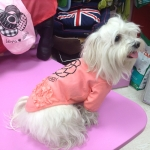 Camelia Shirt for Dogs in Salmon Pink