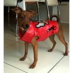 Giacca Biker per cani Rossa