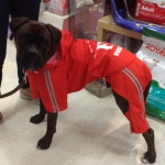 Red Raincoat for Large Dog 4 Legs