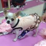 Vestido de Ceremonia Chic Rosa con Lunares