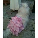 Summer Dog Dress with Polkadot in Pink