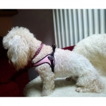 Harness Small/Medium Dogs in Pink Adjustable on the Belly