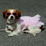 Ceremony Dress in Pink with Tulle for Small Dog