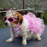 Vestito da Sposa per Cane in Lilla