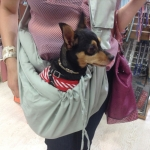 Shoulder Bag with Pocket for Dogs up to 15 kg