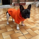 Sweat-Shirt Uni Orange pour Chiens