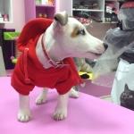 Sudadera para perros pequeños en Rojo