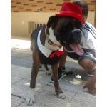 Chaleco De Fiesta para Perros Grandes