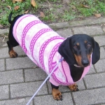Pink Winter Pullover for pets