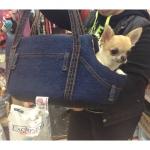 Sac Denim pour Chihuahua et Petits Chiens