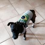 Canottiera Grigia Brasile 2014 per Cani Piccoli