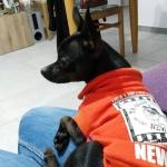 Felpa per Cane Senza Cappuccio in Arancione