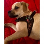 Harness Small/Medium Dogs in Green Camo Adjustable on the Belly
