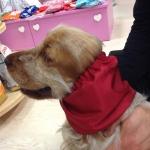 Fascia Copriorecchie Impermeabile per Cani in Rosso