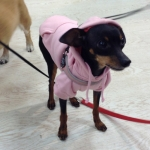 Felpa Rosa per Cani