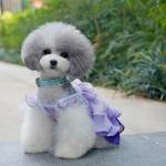 Vestito per Cani Piccoli con Balze in Color Lavanda