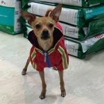 Impermeable Rojo para Perros Pequeños