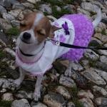 Robe pour Chien avec Jupe orné de Petites Roses Lilla
