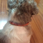 Nylon Dog Collar AS Roma Football Team