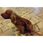 Guinzaglio fisso per Cani della Roma