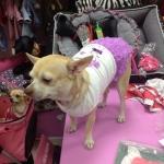 Vestido Perro Pequeño con Falda con Rosas Lila
