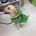 Green Sleeveless Raincoat for Large Dogs