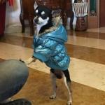Dog Bomber Jacket in Blue