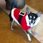Santa Costume for Dog