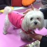 Fleece for Small Dogs in Bright Pink