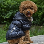 Bomber Jacket for Small Dogs with Zip and Hood in Black