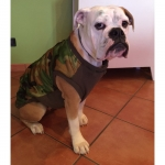 Camouflage Jacket for large dogs with opening on the top