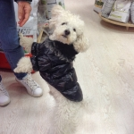 Abrigo para Perros en Negro con interior en Polar