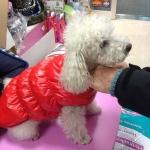 Piumino Rosso Smanicato per Cani Taglia Piccola e Media