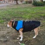Cazadora Azul para perros grandes