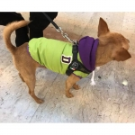 Green Coat for Chihuahua and Small Dogs