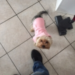 Pink Hooded Sweatshirt for Small Dogs