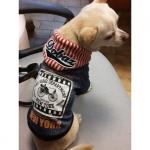 Felpa New York Blu con Cappuccio per Cane Piccolo