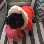 Coat with Fur for Dogs in Orange