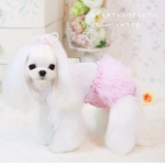 Dog Sanitary Panty with Tulle in Pink