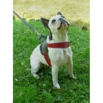Fluo Yellow Cortina Harness for Small and Medium Dogs
