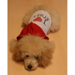 Camiseta con Capucha I LOVE ROMA para Perro Pequeño