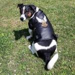 Cazadora motera de piel sintética para Perro en Negro