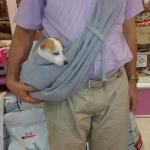 Marsupio Gris para Perro Pequeño