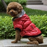 Bomber Jacket for Small Dogs with Zip and Hood in Red