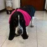 Pink Sleeveless Jacket for large size dogs