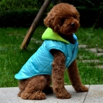 Waterproof Coat for Dogs in Blue with Yellow Hood