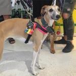 Pettorina Morbida Regolabile per Cani Piccoli in Fucsia Fluo