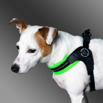 Soft Adjustable Harness for Small Dogs in Fluo Green