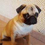 Collier Blanc avec 3 Rangées de Perles pour Chien